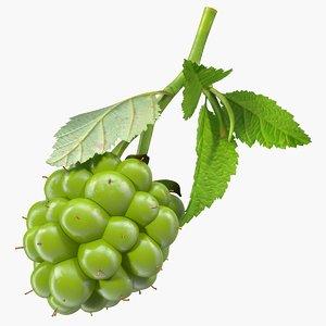 unripe green blackberry leaves 3D