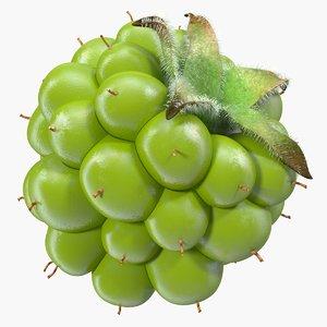 3D unripe green blackberry berry