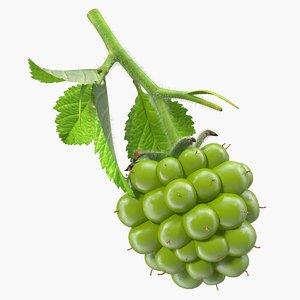 unripe green blackberry leaves 3D model