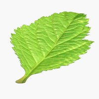 blackberry leaf fur 3D model