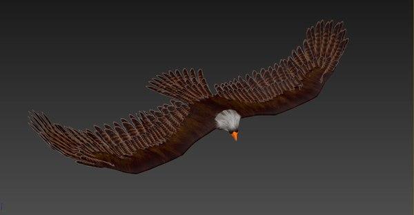 3D rigged eagle model