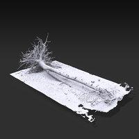 3D desert tree laying 04 model