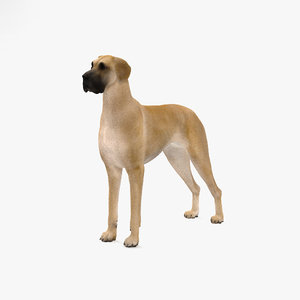 3D great dane