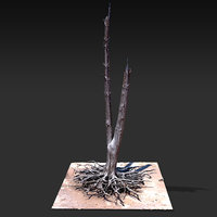 Desert Tree standing 01 3D Scan