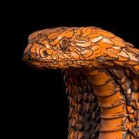 cobra head 3D
