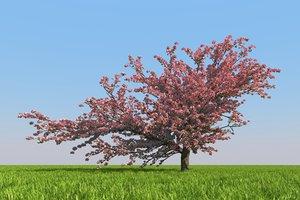 blossoming sakura 3D model
