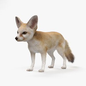 3D fennec fox hd model