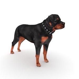 3D rottweiler dog