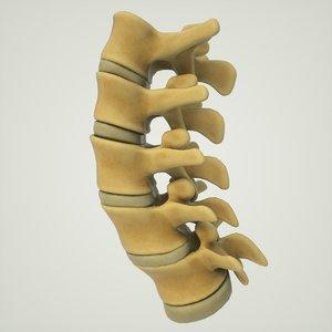 3D human lumbar vertebrae spine model