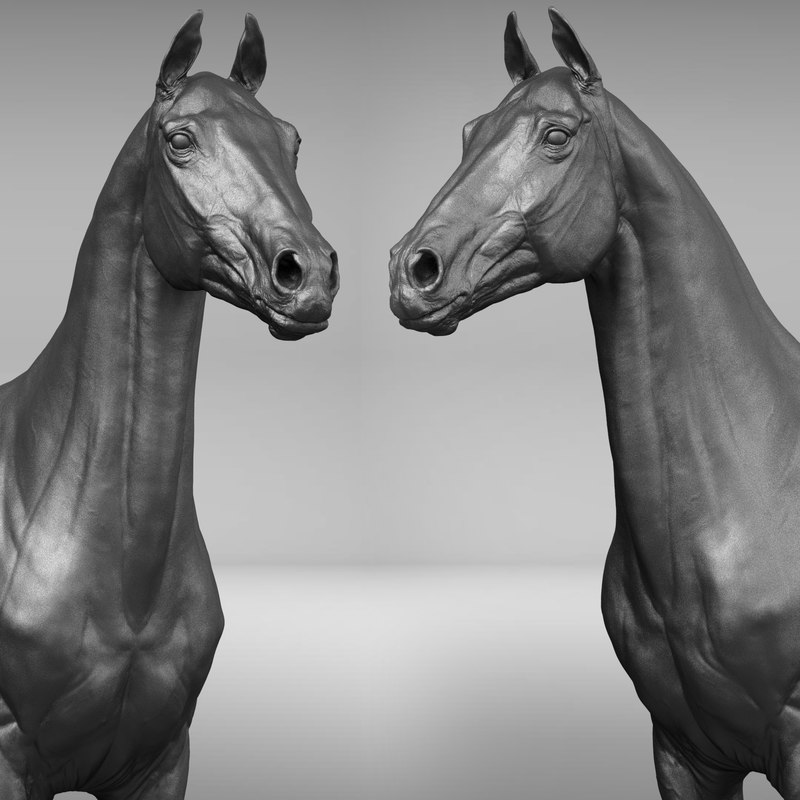 horse ztl zbrush 3D model