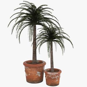 decorative pot plant 3ds
