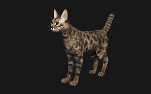 bengal cat model
