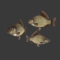 Fish Crucian Carp
