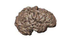 ct scan human brain 3D model