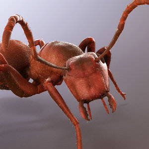 ant animations model