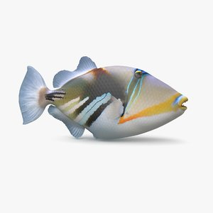 3D picasso triggerfish