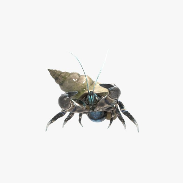 3D model hermit crab rigged animation