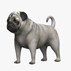 pug 3D model