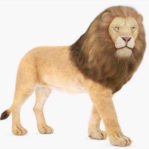 rigged lion 3D model