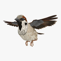 house sparrow flying pose 3D model
