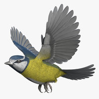 3D rigged eurasian blue tit model