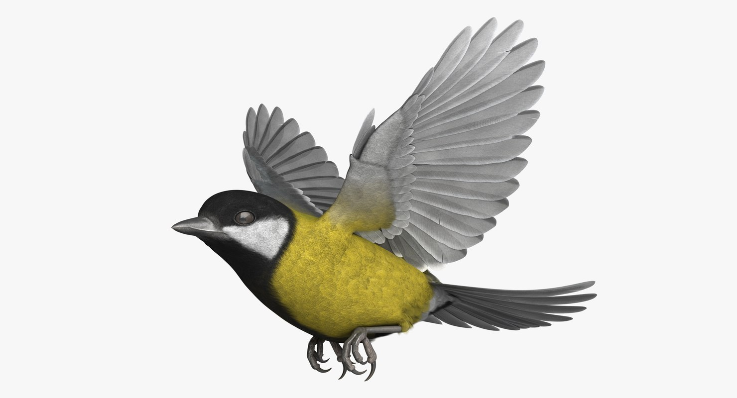 3D rigged great tit model
