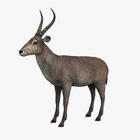 gazelle animal 3D model