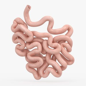 small intestine 3D model