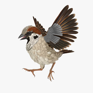 3D sparrow walking pose