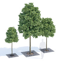 3D sunny tree-grill model