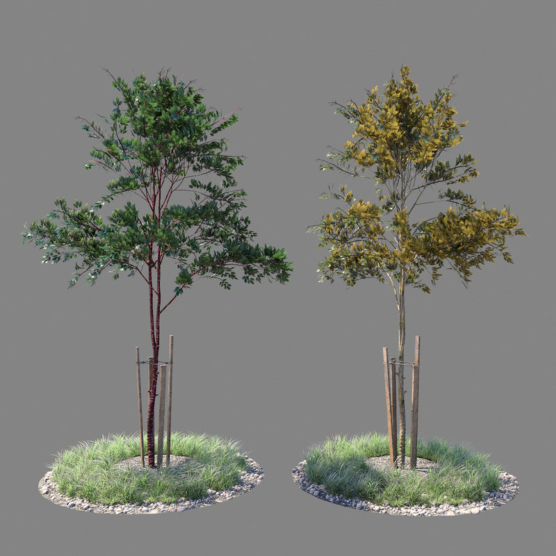 3D model young tree