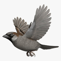 3D rigged house sparrow