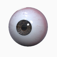 realistic human eye ball model