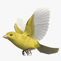 3D model rigged domestic canary