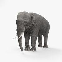 3D elephant asian asia