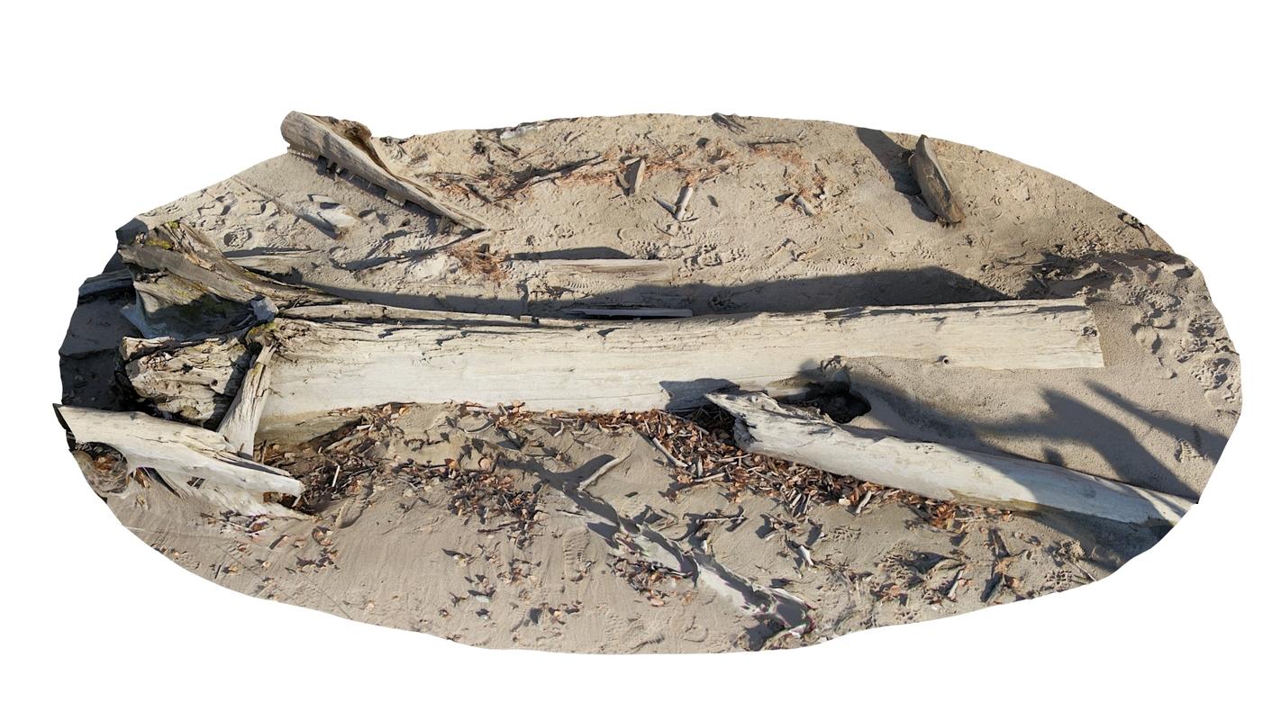scan log beach 3D model