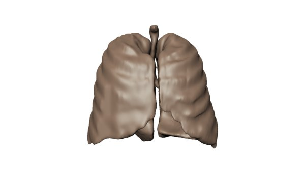 real human lungs cast 3D model