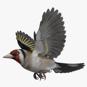 3D rigged european goldfinch