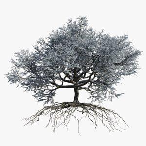 3D oak winter 2 tree