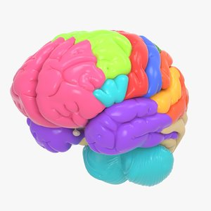 brain anatomical segments 3D model