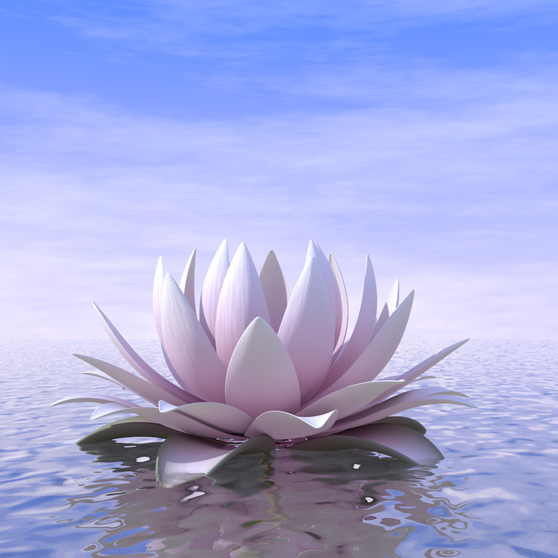 3D model blossom water lily