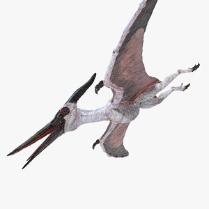 pterosaur pteranodon white 3D model