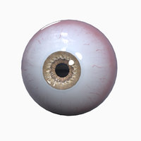 3D realistic human eye ball model