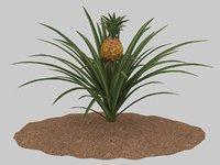 3D pineapple growing model