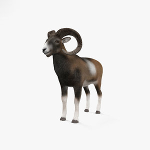 3D sheep mammal animal