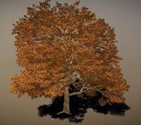 3D green ash tree model