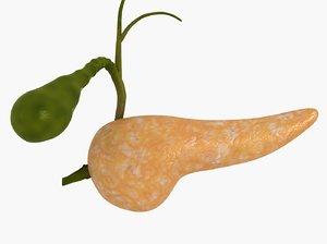 3D model pancreas cross-section