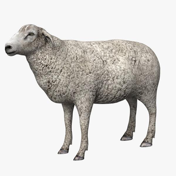 sheep animal beast 3D