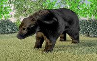 Bear with hairs
