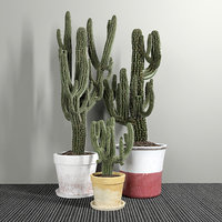 Set of Three Cactuses Carnegiea